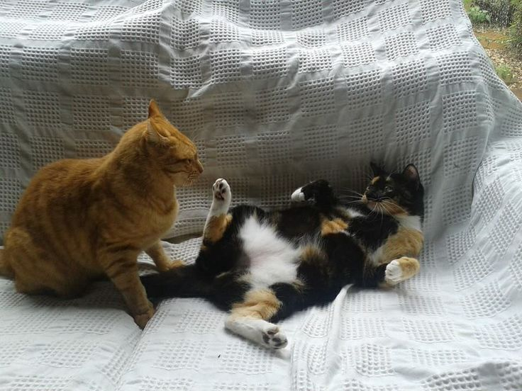 Two cats play-fighting