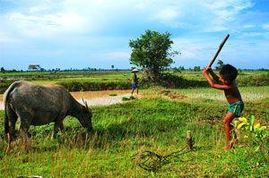 Découvrez les plus beaux endroits du Sud du Vietnam au cours d'un voyage inoubliable ! De Hô-Chi-Minh-Ville à Nha Trang, passez par Can Tho et le Delta du Mékong, le parc national de Cat Tien ou la ville de Dalat entourée de forêts et cascades.