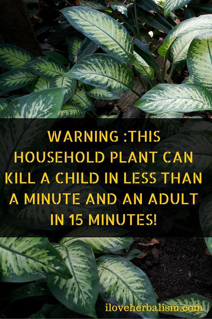 73 best Garden Poison Plants images on Pinterest Poisonous