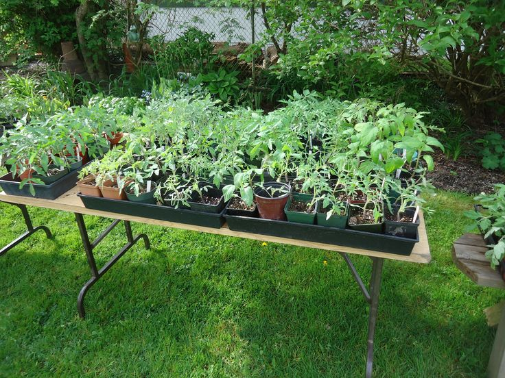 Plant Sale Update For This Weekend