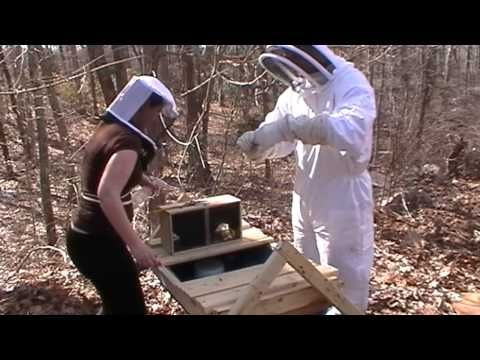 Installing Package Bees In Top Bar Hives   YouTube