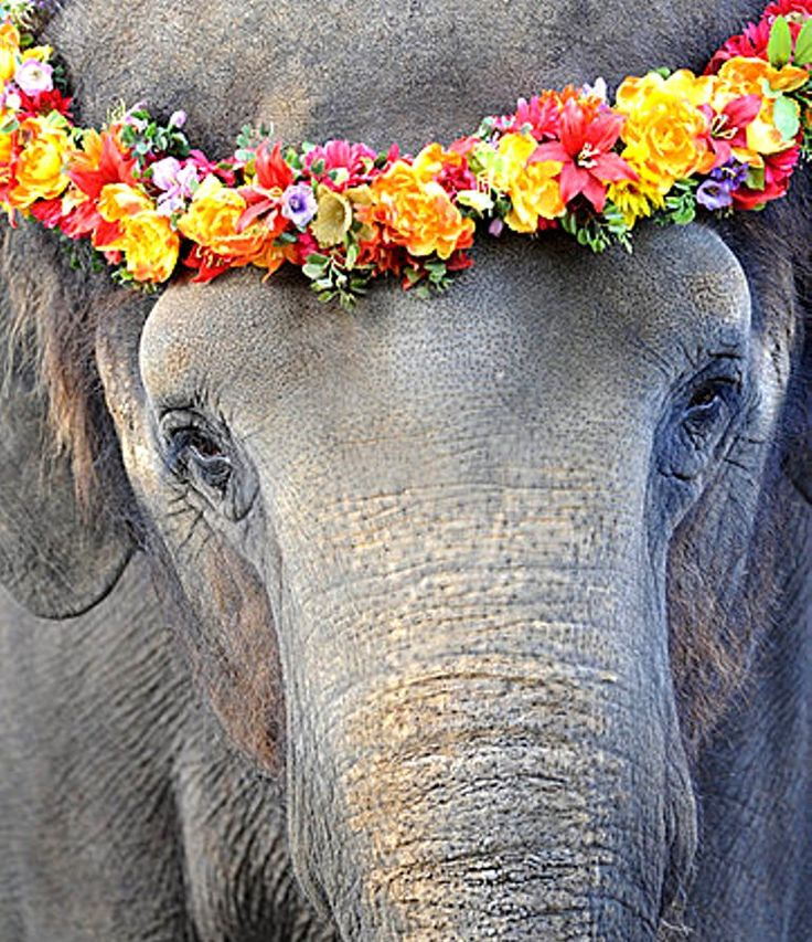 USED Elephant flower crown  Toni Kami ❀Flowers in their coats❀