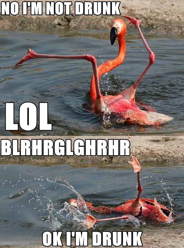 ...looks like he had too much Rum Punch!!!: Laughing, So Funnies, Hilary, Giggl, Humor, Drunk Flamingos, Smile, Funnies Stuff, Animal