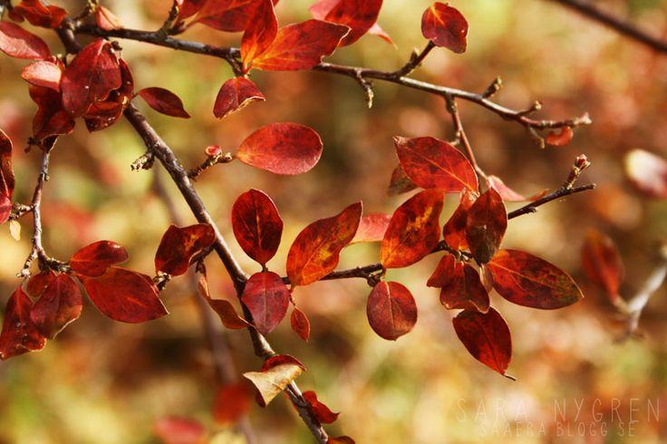 Autumn leaves saaera.blogg.se