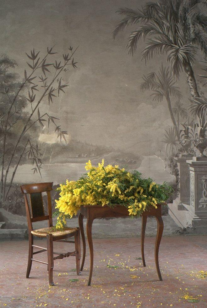 Mise en scène du mimosa - Fragonard PARFUMEUR #romantique #mimosa #fleur #Fragonard