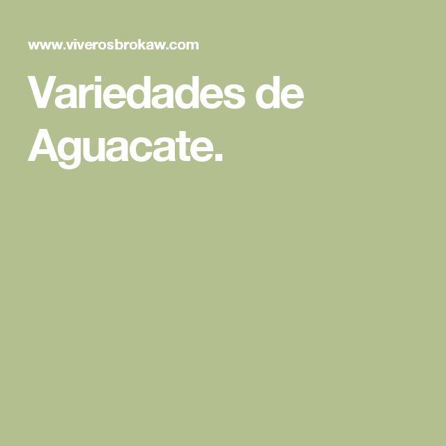 Variedades de Aguacate.