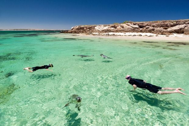 Swimming with sea lions on the Eyre Peninsula. The secret's out on this spectacular Australian coastal playground.