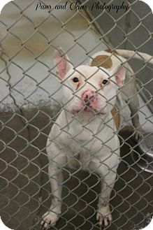 Munford, TN - Terrier (Unknown Type, Medium). Meet A3, a dog for adoption. http://www.adoptapet.com/pet/12490236-munford-tennessee-terrier-unknown-type-medium