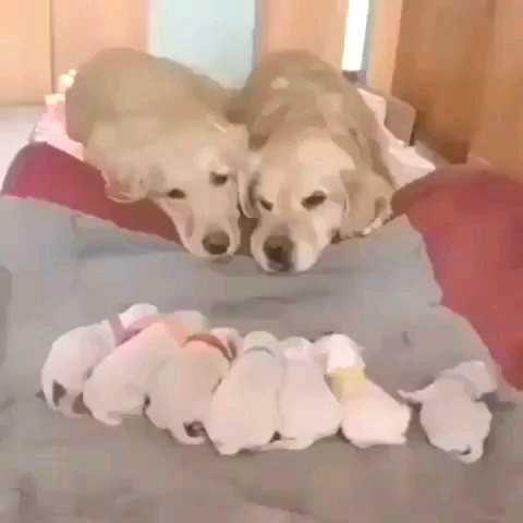 Summer Safety Tips From The Vet For Preventing Heat Stroke In Dogs Dogtime Dogs Golden Retriever Golden Retriever Dogs