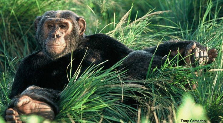 Visit Classic Uganda, the Pearl of Africa, to discover all this beautiful country has to offer from tree climbing lions to the rare Mountain Gorilla.