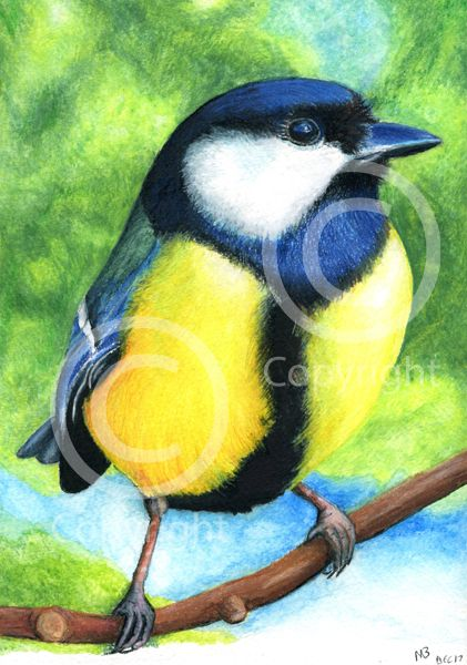 Great Tit in watercolour pencils - This Great Tit was created for the cover of my British Garden Birds calendar. Hand-drawn as part of my British Garden Birds collection, I created this artwork using watercolour pencils. This drawing was created on watercolour paper using watercolour pencils.