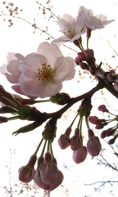 Los #almendros en flor son una opción increíble para fotografiar en #primavera. ¡Date prisa, que no duran mucho! #fotografia