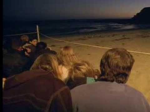 Penguins in Melbourne, Australia - David Attenborough - BBC wildlife