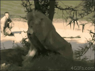 The derpiest lion. It gets funnier every time!
