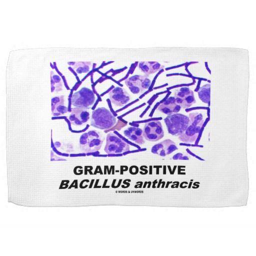 Gram-Positive Bacillus anthracis (Bacteria) Towel #anthrax #bacteria #bacillus #gram-positive #health #medicine #wordsandunwords  Towel featuring the origin of anthrax.