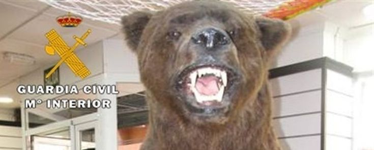 Intervenido un ejemplar de oso disecado en una tienda de segunda mano de Albacete