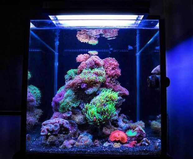 216 best images about reef aquariums on pinterest for Saltwater fish tank