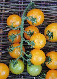Image of Golden Cherry Tomato