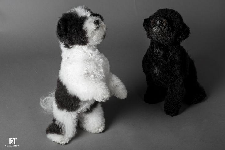 Servizi fotografici professionali per cani e animali domestici! #dog #cane #photo
