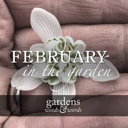As trailed in my previous post, I've decided to start a series on the blog using highlights from my Instagram gallery to chart the garden through the year. And so, without undue ceremony, let me welcome you to the first post in that series. This week, as we get ready to leave winter behind, I'm taking a look back at February 2017.