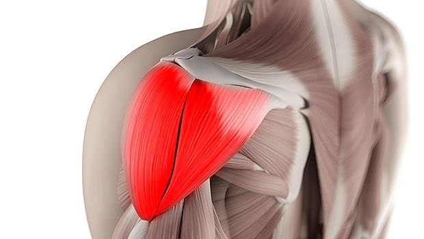 4 Best Shoulder-Saving Exercises - Fitness and Power