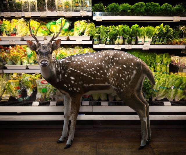 shopping fallow-deer