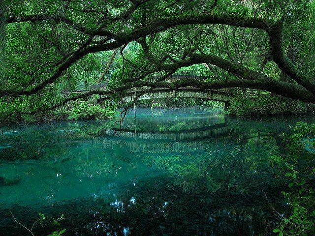 Fern Hammock Spring - Marion County, Florida. (photo by Matt Taylor)