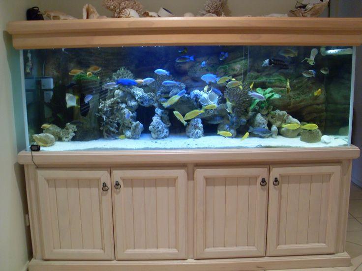 Best 25 aquarium setup ideas on pinterest betta tank for Fish tank setup ideas
