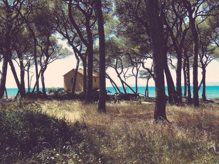 Maremma Toscana. Scarlino, località La Polveriera.