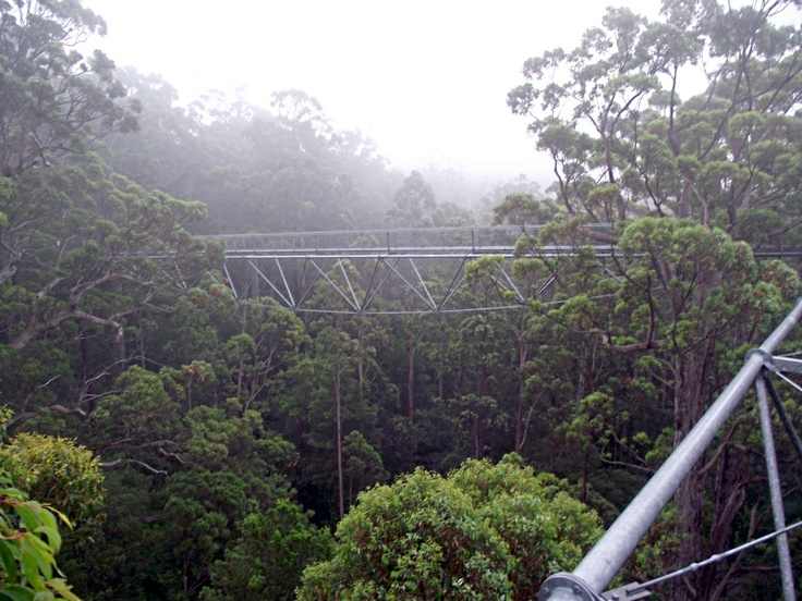 Tree Top Walk view - Valley of the Giants, South West WA, Denmark.