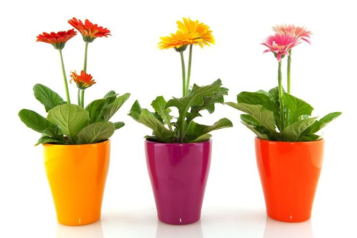 Esistono varie tipologie di piante da appartamento che puoi comodamente coltivare e prendertene cura anche senza un giardino. http://blog.verdeimpianti.it/index.php/principali-piante-da-appartamento/ #piantedaappartamento #giardinaggio