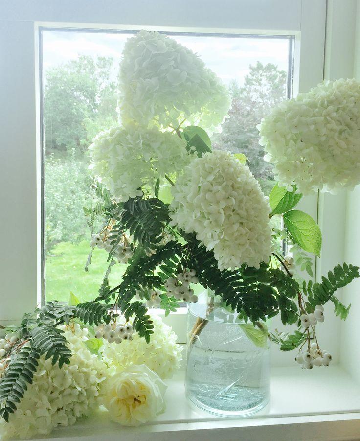 Hortensia og kvitrogn i Norgesglass