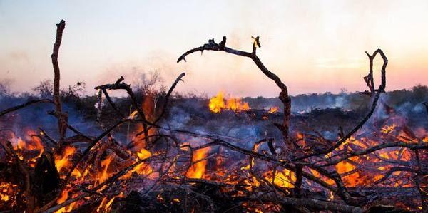 Burger King: re della deforestazione in Brasile, la nuova indagine (PETIZIONE)