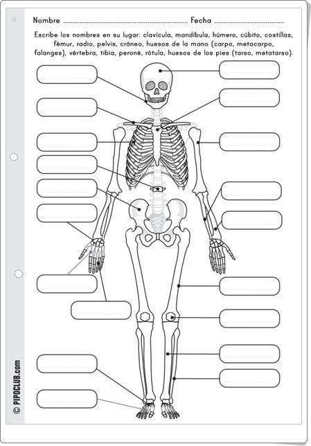 http://www.pipoclub.com/blog/pdfs/huesos_e.pdf