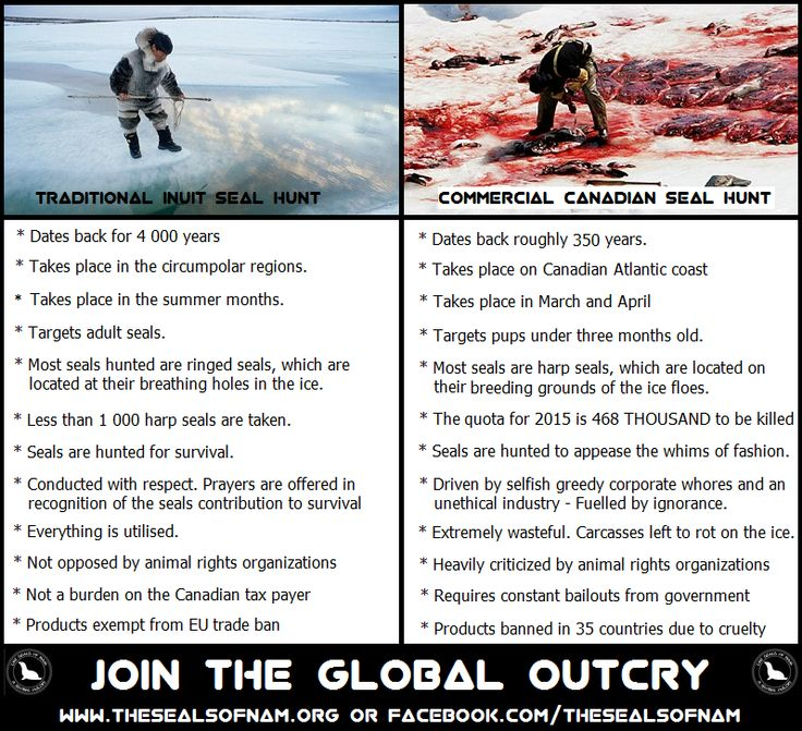 what are the differences between the seal hunts