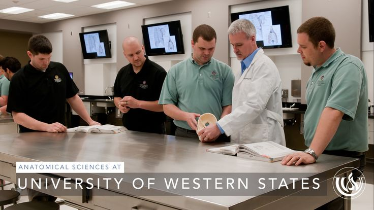 At University of Western States, every chiropractic student has the opportunity to perform a full dissection of a human cadaver during the first nine months ...