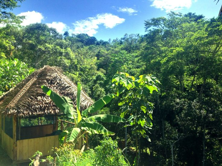 A relaxing tambo and the beautiful jungle at our magical ayahuasca retreat center, The Garden of Peace in Tarapoto, Peru.