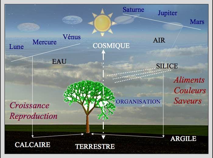 relation-cosmos-terre-plante