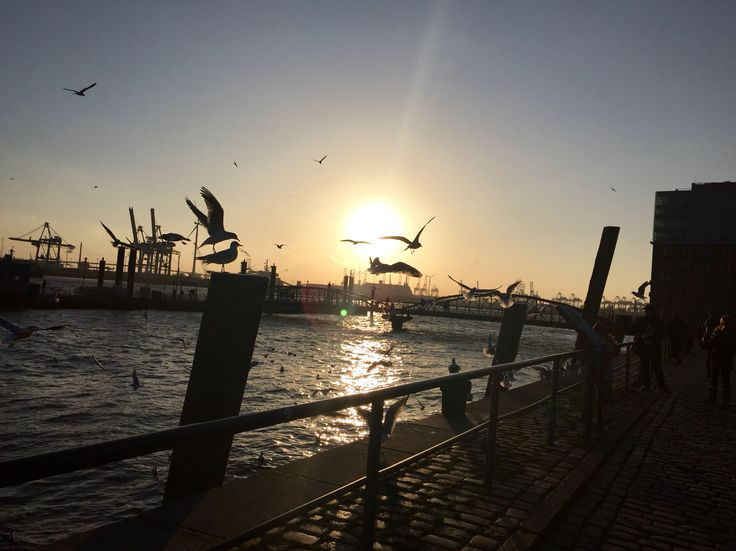 Sonnenuntergang im Winter im Hafen von Hamburg.