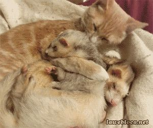 Cat and ferret cute animals cat cats adorable animal kittens gifs kitten gif ferret