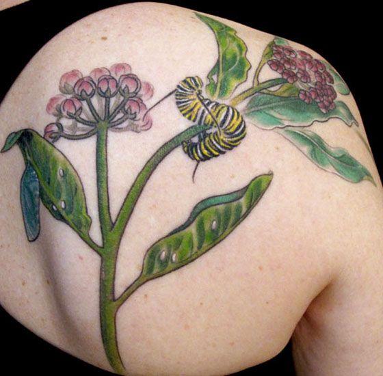 Significado Tatuagens Lagartas - Mais TatuagemMais Tatuagem – Guia e site de Tatuagens | + Tattoo