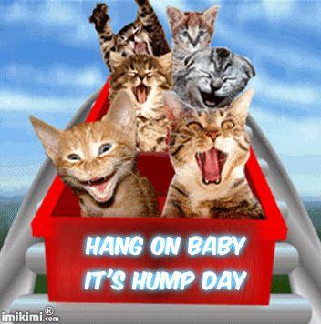 Wednesday Roller Coaster Cats - Jewels Art Creation