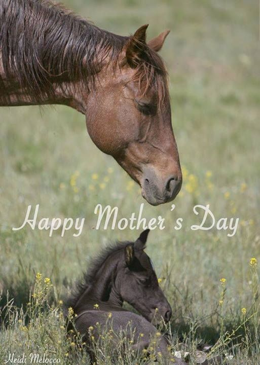 Happy Mothers Day | Horses | Pinterest | Mothers, Happy ...