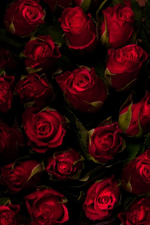 Blood red roses                                                                                                                                                      Mais