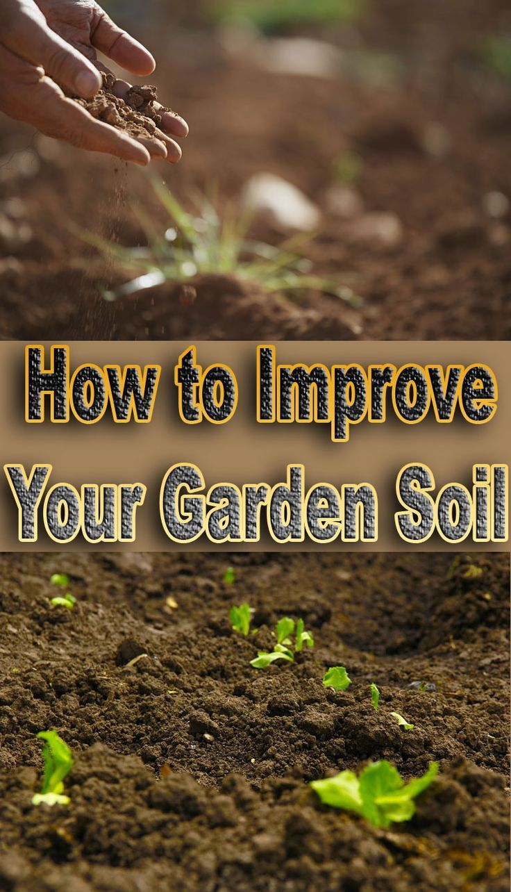 Lovely 25+ Unique Garden Soil Ideas On Pinterest | Vegetable Garden Soil, Garden  Compost And Growing Vegetables