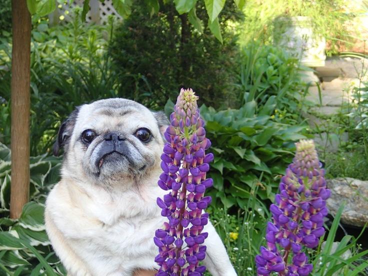 Tonka in the Garden