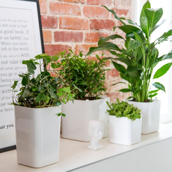 Functional and stylish Eden self-watering pots by Orthex make it easy to take care of the plants at home. The plant absorbs the exact amount of water from the container at the bottom of the pot. The measuring stick shows when its time to add water. The stylish Eden pots are designed by Pentagon Design and they were awarded with the Red Dot Design Award in 2012.