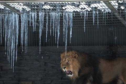 Korkeasaari Zoo in the winter, Helsinki, Finland