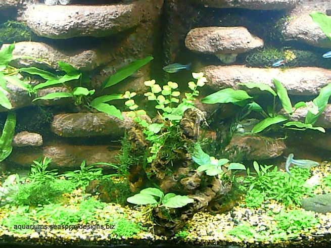 1000 Images About Underwater Landscaping On Pinterest