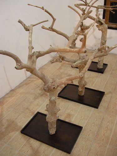 These are awesome stands for birds. All natural and practically indestructible if they are Java Wood. We actually have great Java Wood perches on our site that are around the same size as this. http://steelybird.com/collections/play-stands